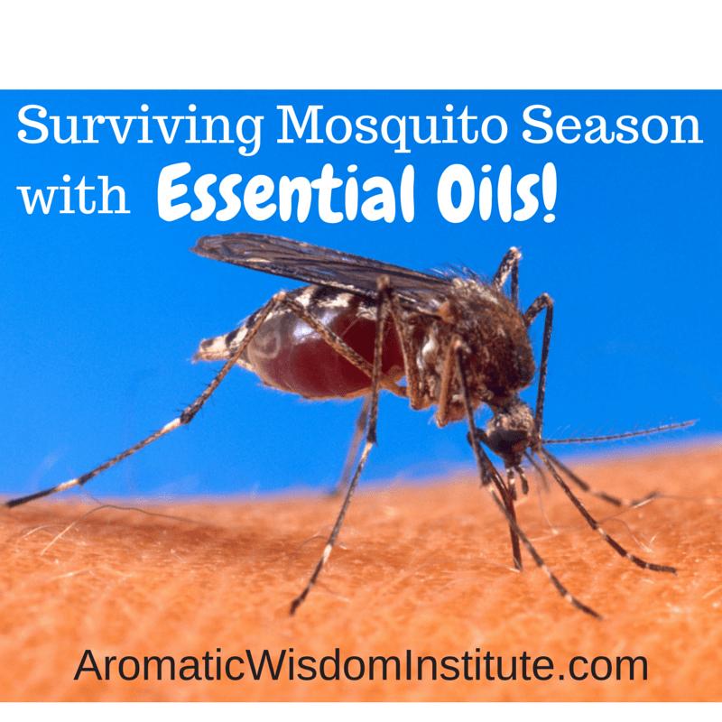 MosquitoGraphic.jpg (1)