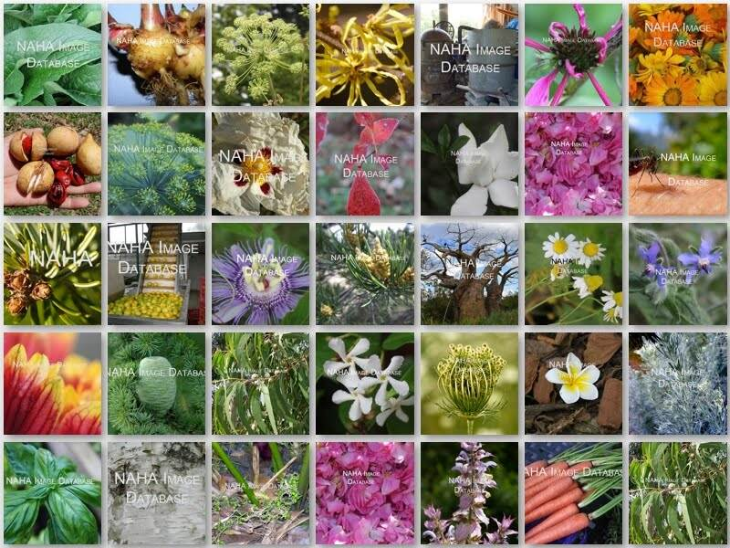 Ideas for Using the new NAHA Aromatic and Herbal Plant Image Database