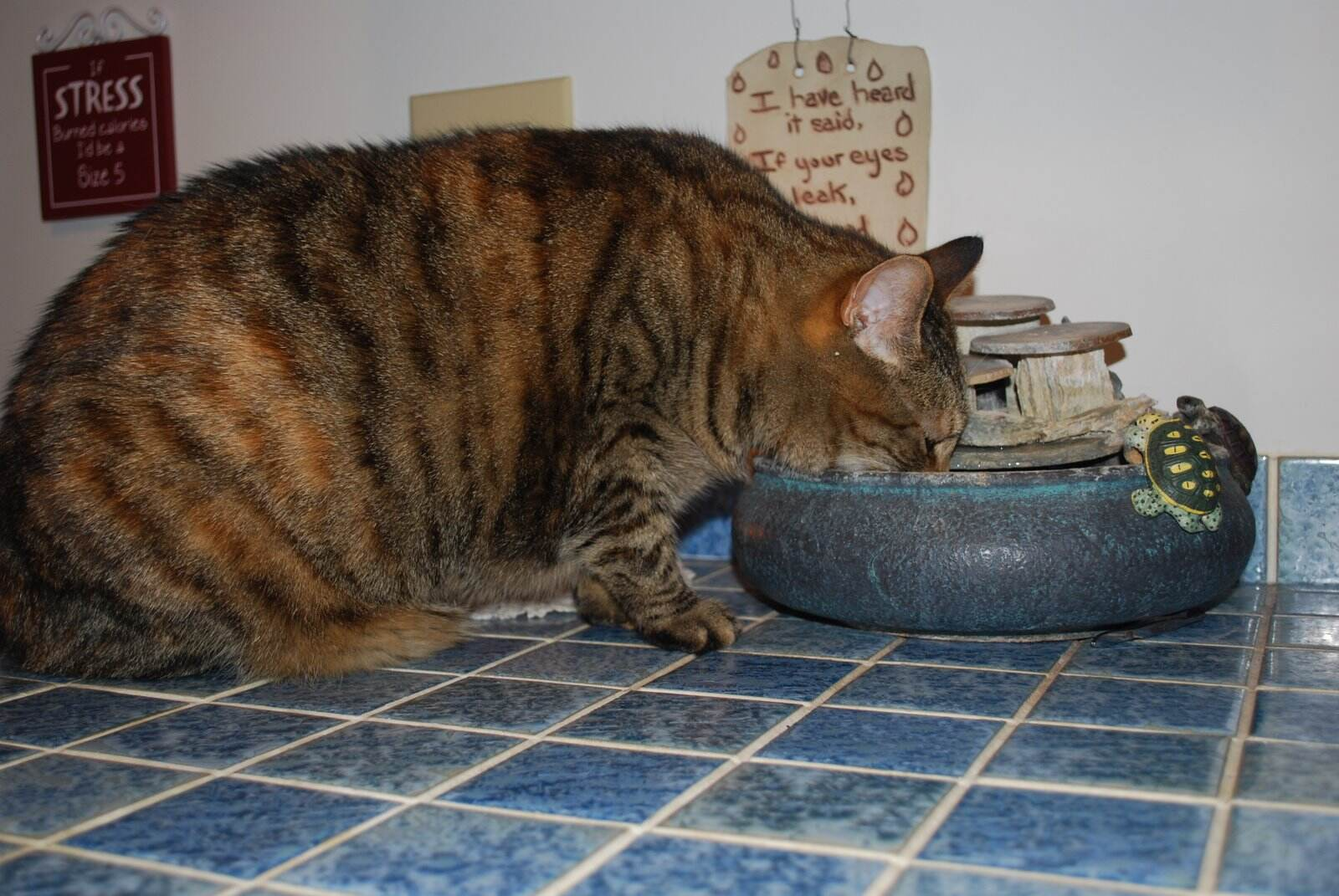 Pepper drinking from fountain