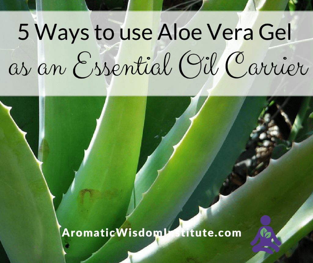 Aloe Vera Essential Oil Carrier