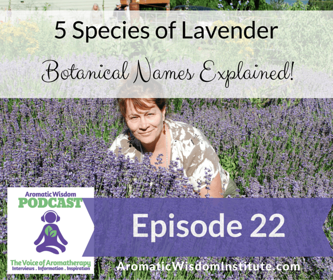 AWP 22:  5 Species of Lavender – Botanical Names Explained!