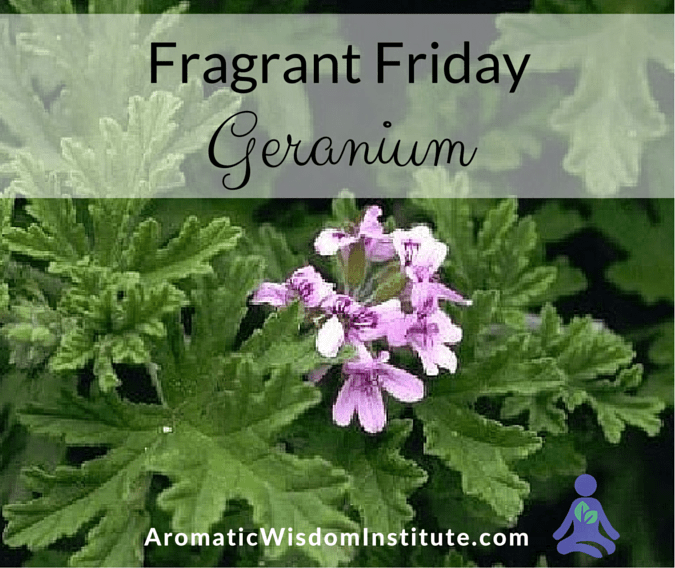 Fragrant Friday:  Geranium pelargonium