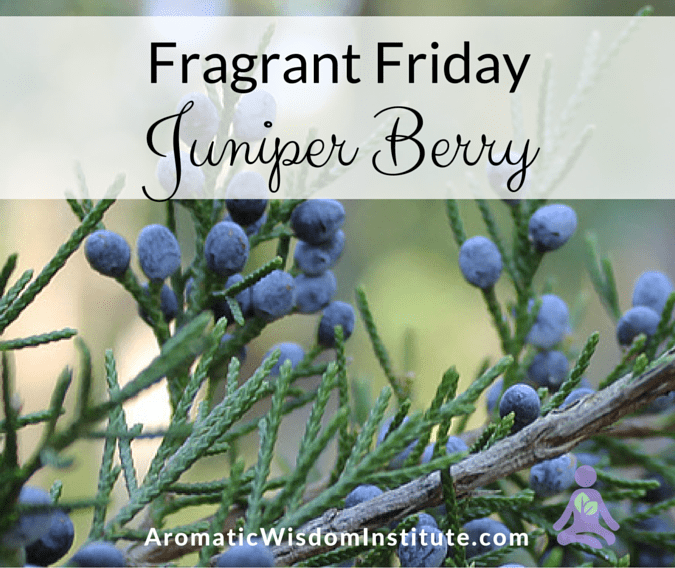 Fragrant Friday:  Juniper Berry (Juniperus communis)