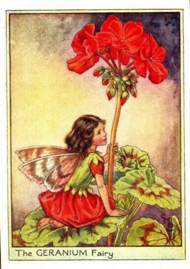 Geranium-Flower-Fairy