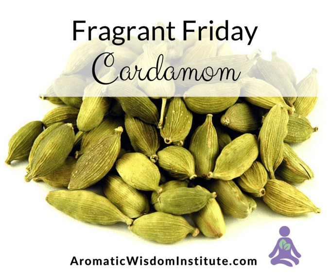 Fragrant Friday:  Cardamom (Elettaria cardamomum)