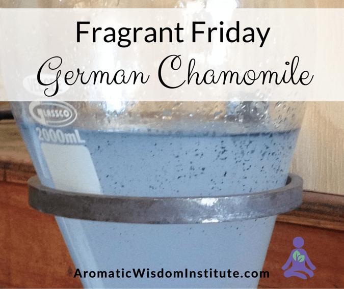 Fragrant Friday German Chamomile
