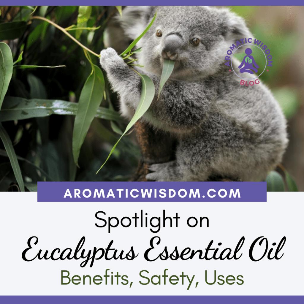 Fragrant Friday: Spotlight on Eucalyptus (Eucalyptus globulus) Essential Oil Profile