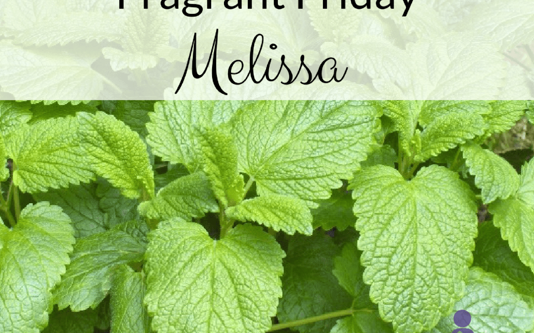 Fragrant Friday: Melissa (Melissa officinalis)