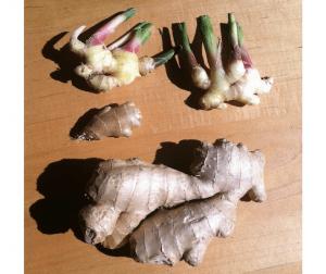 Fragrant Friday Ginger Root