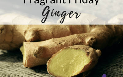 Fragrant Friday: Ginger (Zingiber officinale)