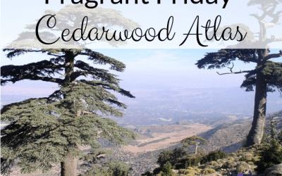 Fragrant Friday: Cedarwood Atlas (Cedrus atlantica)